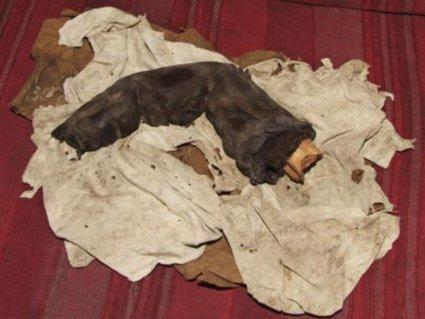 Dedo de múmia gigante egípcia