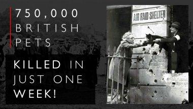 Βρετανική Pet Σφαγή
