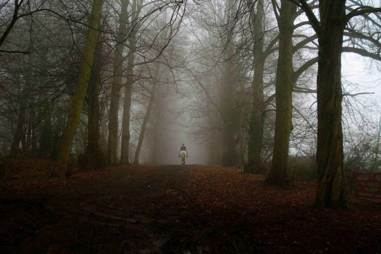 Dering (Screaming) Woods, Ashford, England