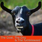 The Goat, The Gnu & The Tumbleweed