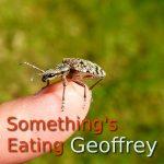 Something's Eating Geoffrey