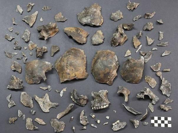 Fragmentos del cráneo antes de ser unidos nuevamente.