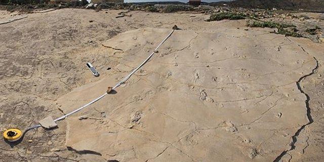 Las huellas fueron descubiertas por Gerard Gierlinski (1er autor del estudio) por casualidad, mientras se encontraba de vacaciones en Creta.