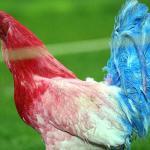 ¿Por qué en el escudo de la selección de Francia hay un gallo?
