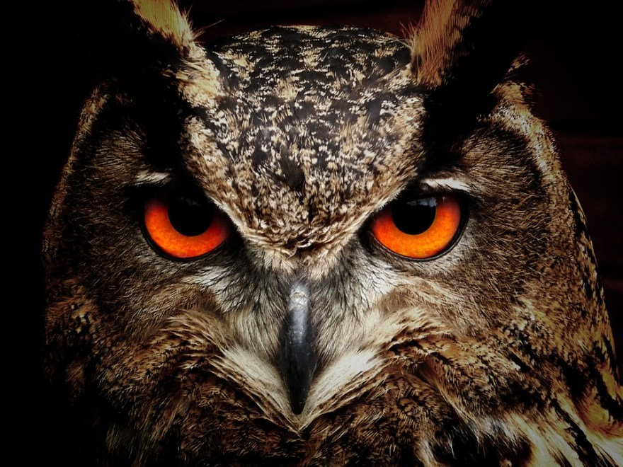 eyes-of-an-owl