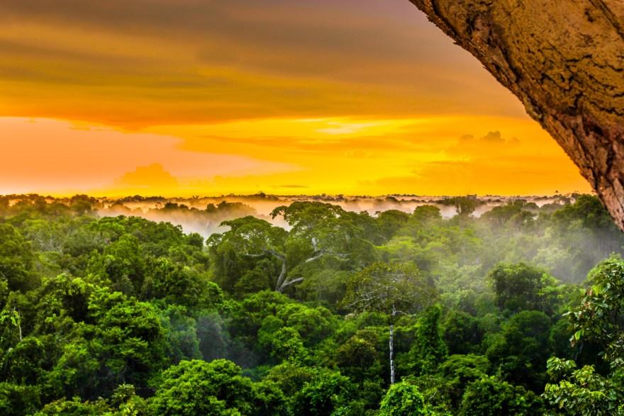 sunset in the brazilian rainforest of Amazonas
