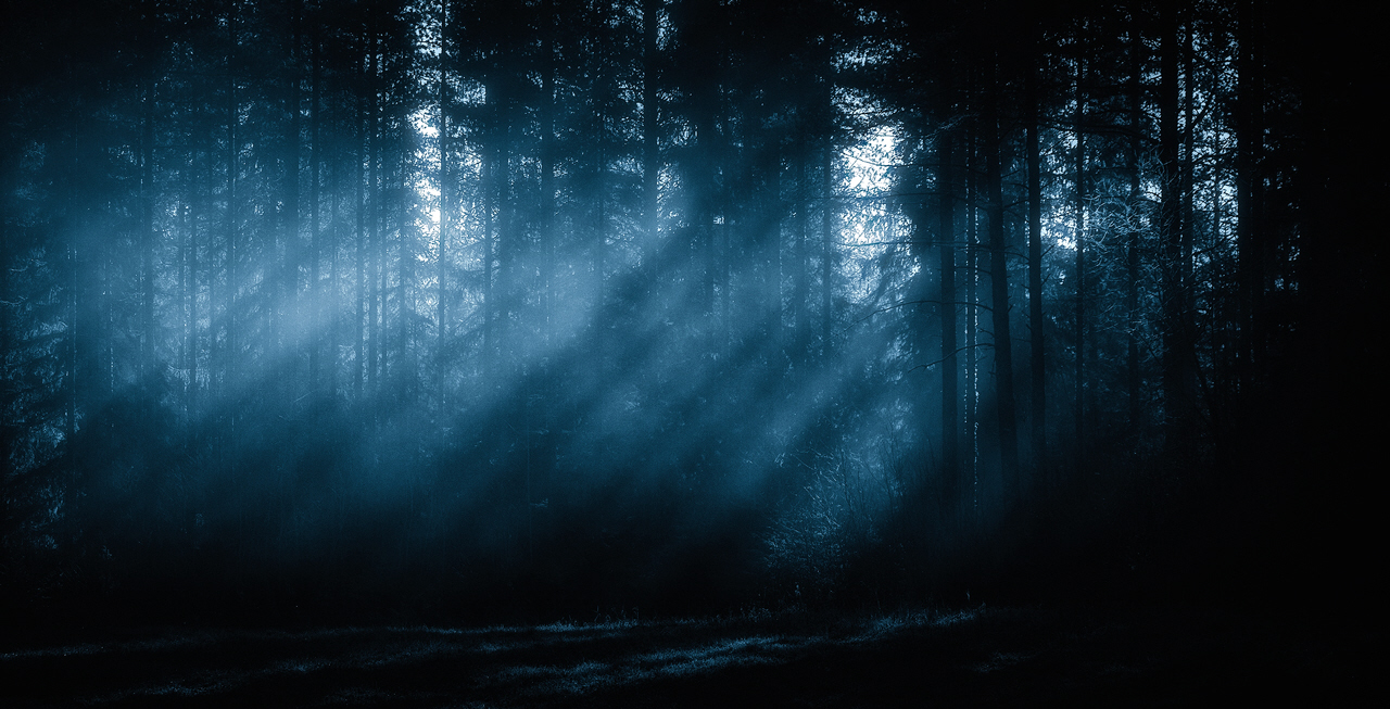 Image result for spooky colorado forest