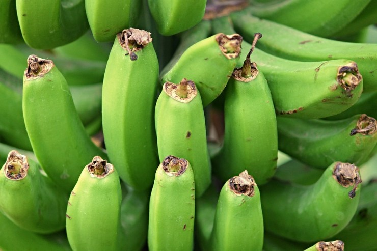 Bananas Is it Good or Bad For Your Weight Loss-banana2