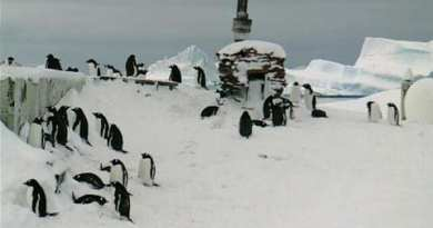 Our Mascot the Penguin…Represents Conveying Our Lady's Messages of Peace to the Ends of the Earth