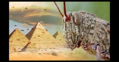 "End of the world: Coronavirus panic and African locust plague spark Bible apocalypse fears..""One of the signs that Jesus gives us for the end of the world is in Matthew 23, verse six and seven."" Biblical scholar"