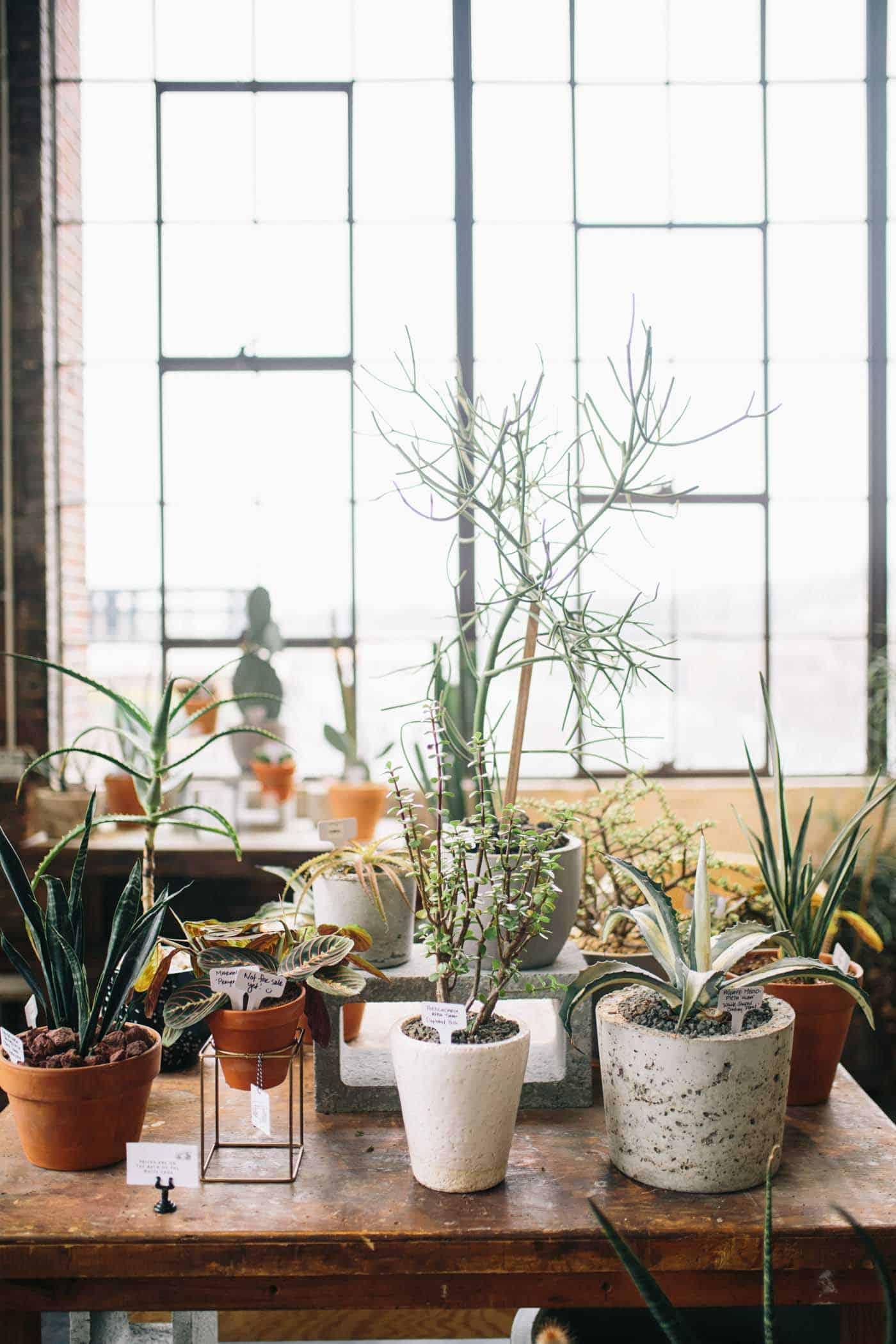 Best Plants Keep Indoors