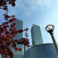 TOP 10 des incontournables de Toronto!