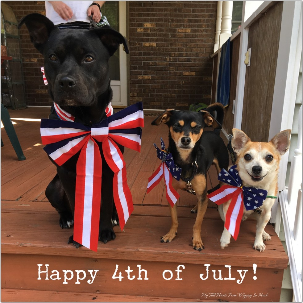 july 4th dogs