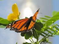 Florida Apr 2012 119