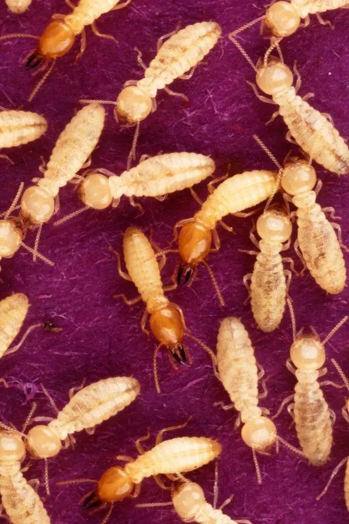 Guide To Termite Treatment Price