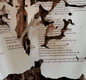 Termite Damage To Book Pages