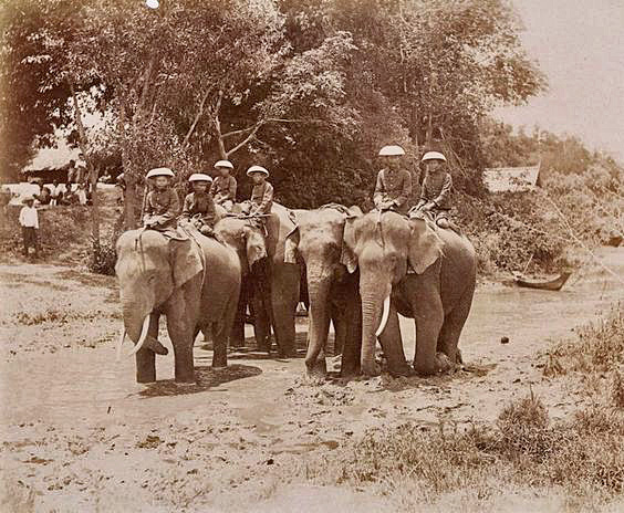 Vintage photo of mahouts and their elephants in 1898 from Loei Province, Thailand