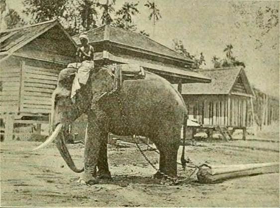 1892 Lampang, Thailand Teak logging