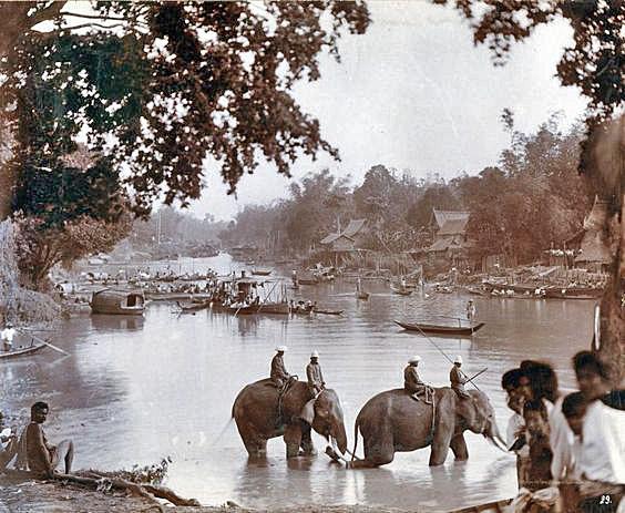 Vintage photo of elephants at Ayuttaya