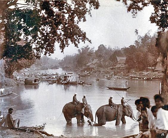 Vintage photo of elephants at Ayuttaya
