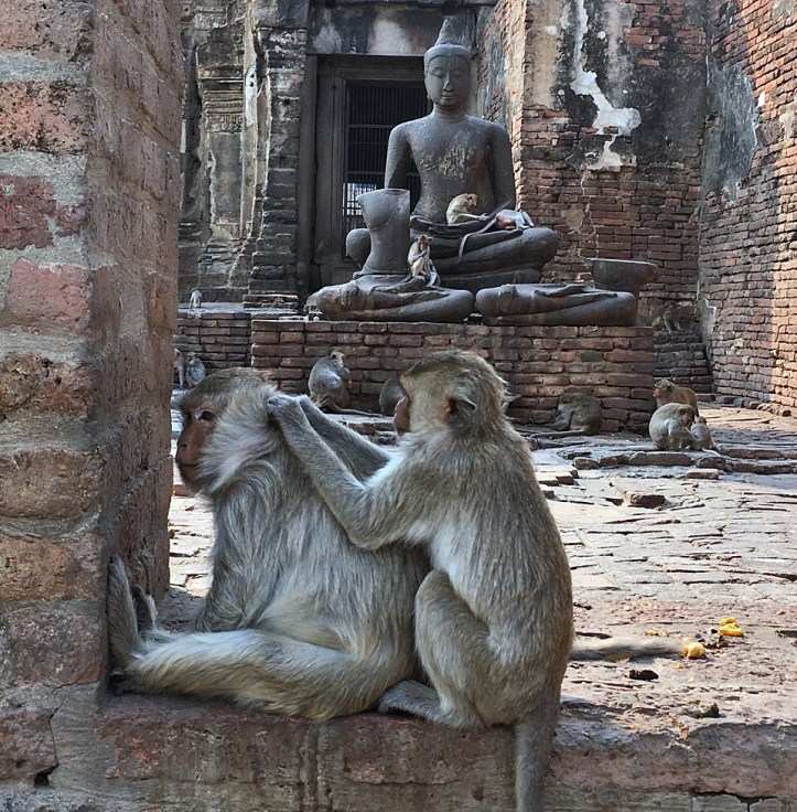 Monkeys of Lopburi Thailand