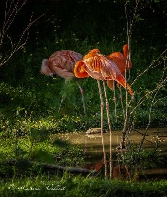 three-flamingoes-7690-
