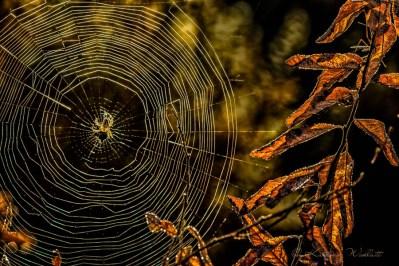 october buckbrush spider and web
