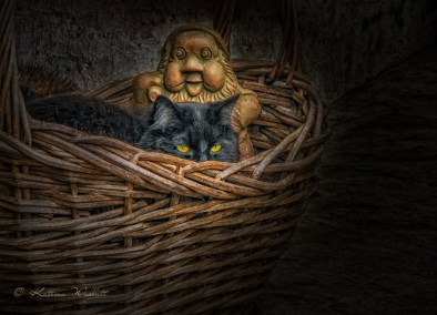 black cat hiding in a basket