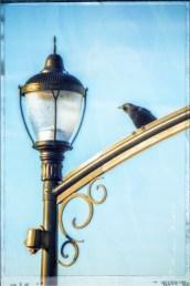 crow on white rock pier light