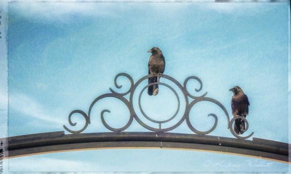 crow on white rock pier light curlicue