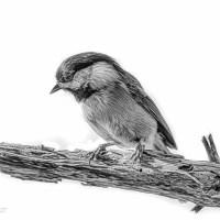 Chickadee textures - Monochrome Madness Week 49