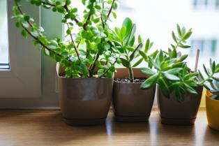 small potted houseplants in window