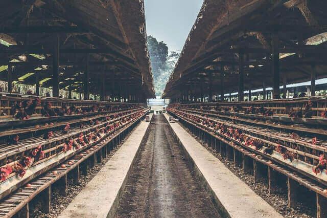 Poultry livestock insurance benefits