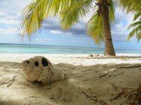 coquillage sur la plage de sauna island en république dominicaine