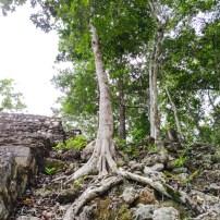 Calakmul Yucatan Mexique