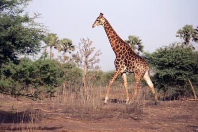 Parc Senegal0
