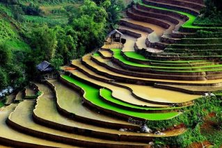 sapa riziere