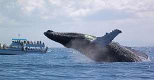 baleine à basse en republique dominicaine
