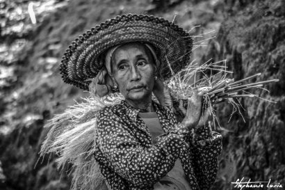 vieille dame portant des brindilles en thailande a chiang mai