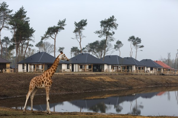 Safari Resort Beekse Bergen