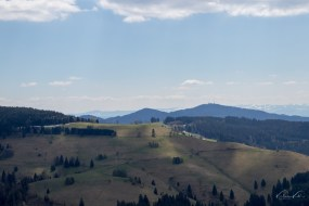 Great view over the black forest landscape