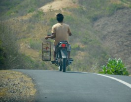 Bird travelling by bike...