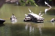 Birds in the park...