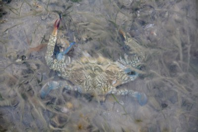 Abstract crab under water...