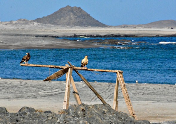 At Masirah island, Oman....