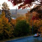Ädellövträd Sundsvall