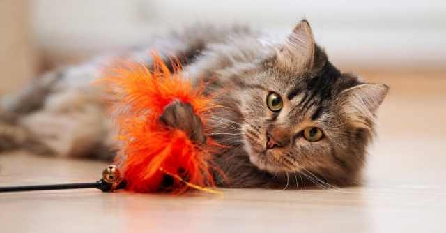 reasons why cats are the perfect pets for families