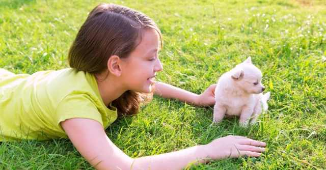 Why Your Child Should Have A Dog