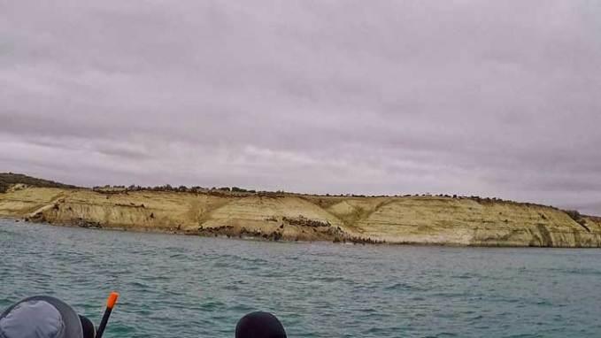 sea-lions-puerto-madryn