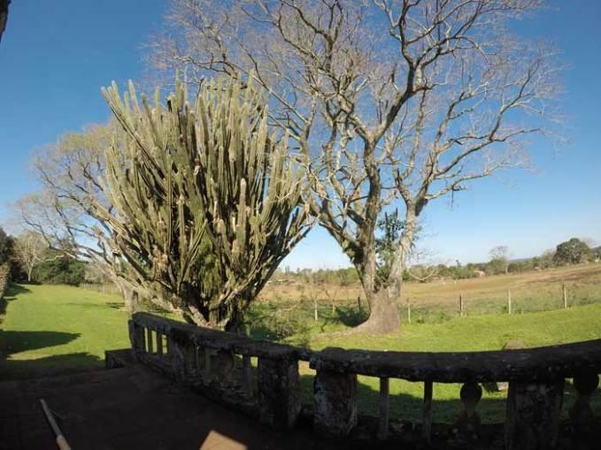 trees-in-san-ignacio